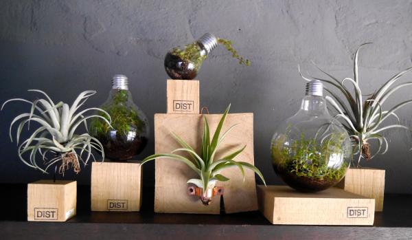 De air plants collectie van Dïst