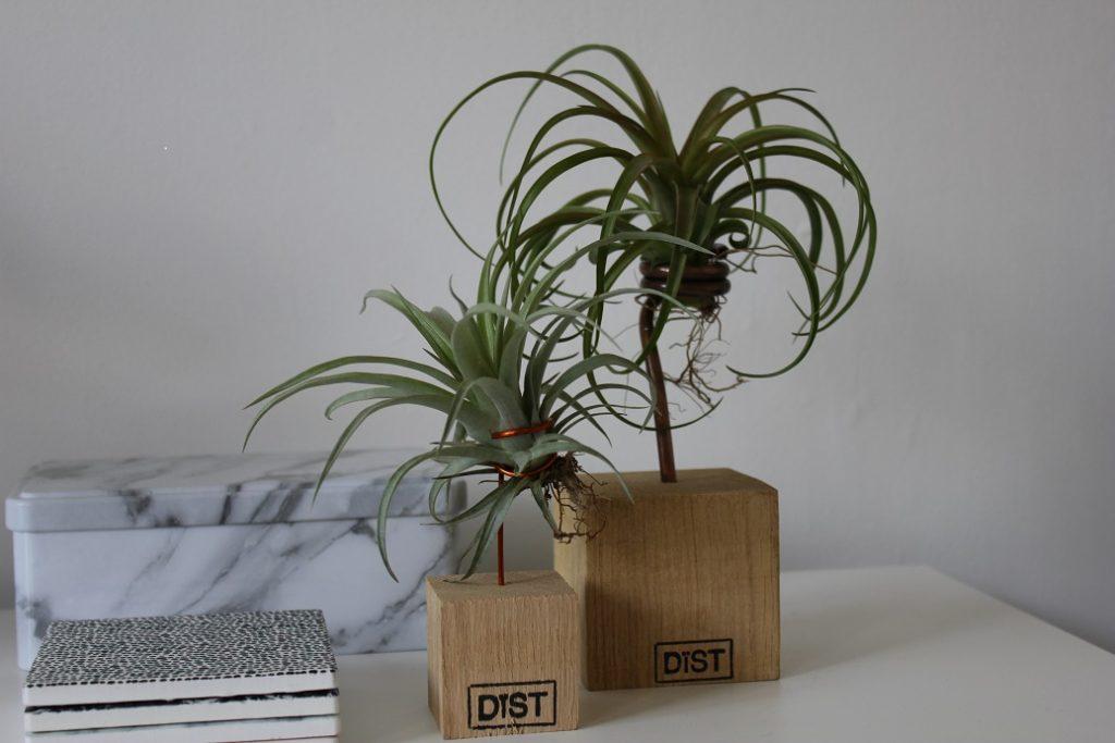 Dïst plant