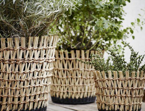 Tips voor de verzorging van je planten